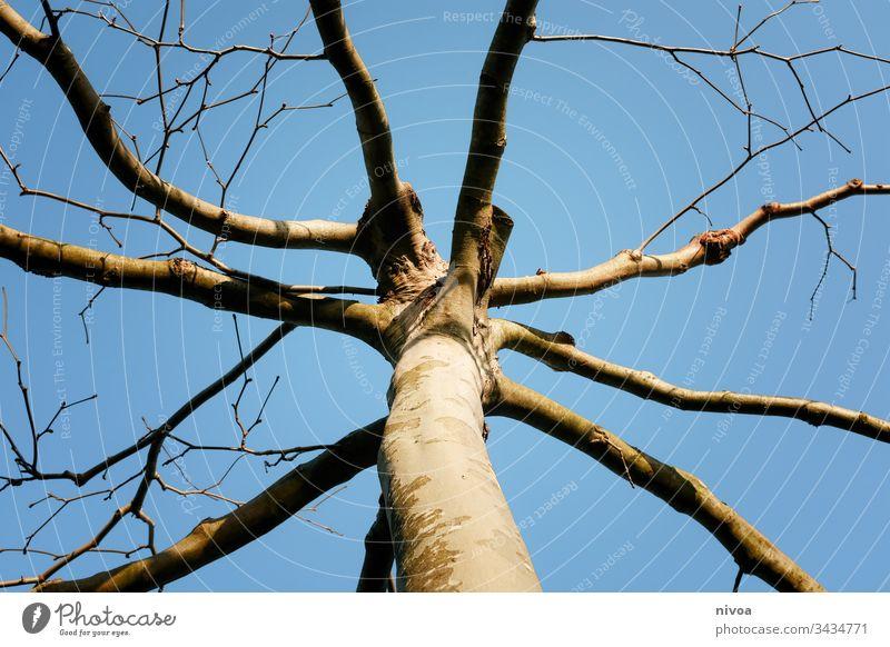 Baumkrone Baumstamm Ast Himmel Natur Winter Landschaft Baumrinde Laubbaum verzweigt Zweig Pflanze grün Wachstum Frühling Licht Menschenleer Außenaufnahme Herbst