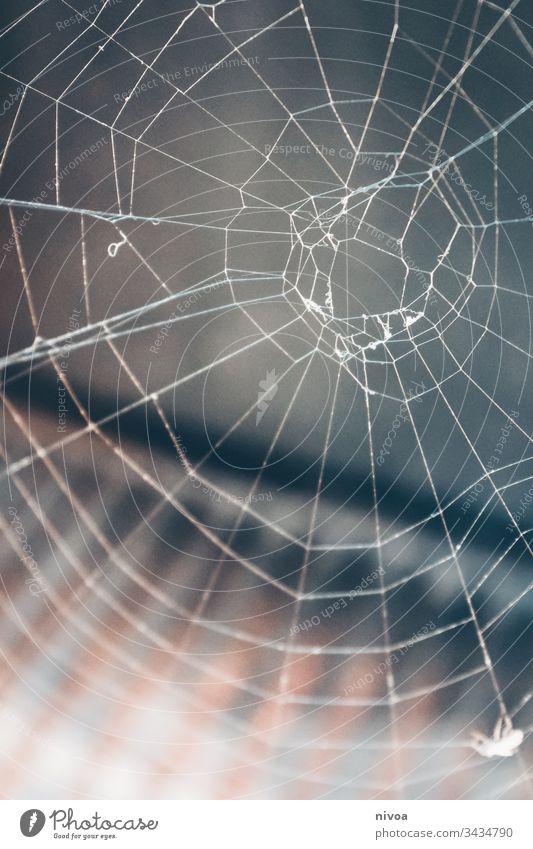 Spinnennetz Netz Natur Makroaufnahme Insekt Angst Schwache Tiefenschärfe Außenaufnahme Farbfoto Nahaufnahme Tier Tierporträt Detailaufnahme Beine Menschenleer