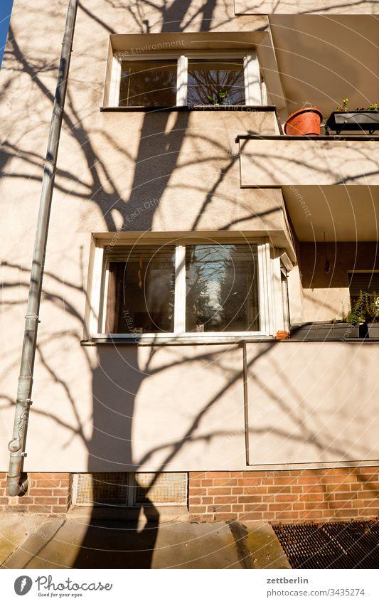 Fassade mit Schatten ast außen baum frühjahr frühling menschenleer natur pflanze ruhe stamm strauch textfreiraum tiefenschärfe wiese zweig licht schatten sonne