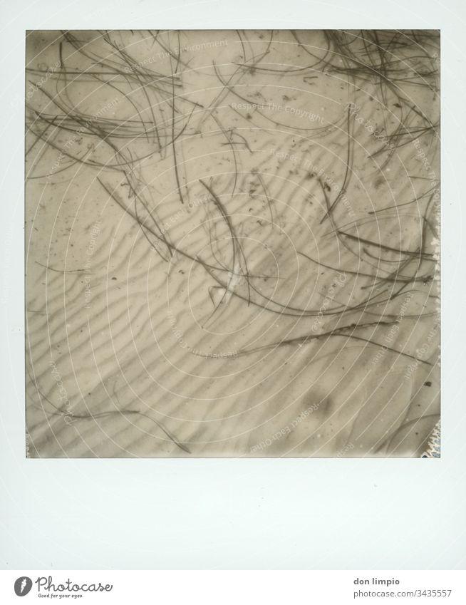Seegras im Flachwasser Wasser Wellenmuster Struktur Küste s/w fotografie Treibgut Polaroid instant photo
