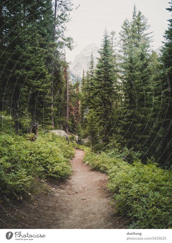 Waldweg zwischen grünen Tannen mit einem Gipfel in der Ferne Grand Teton Nationalpark Leben USA Nadelbaum Bäume Pflanze Hügel wandern Tourismus Klima Wolken