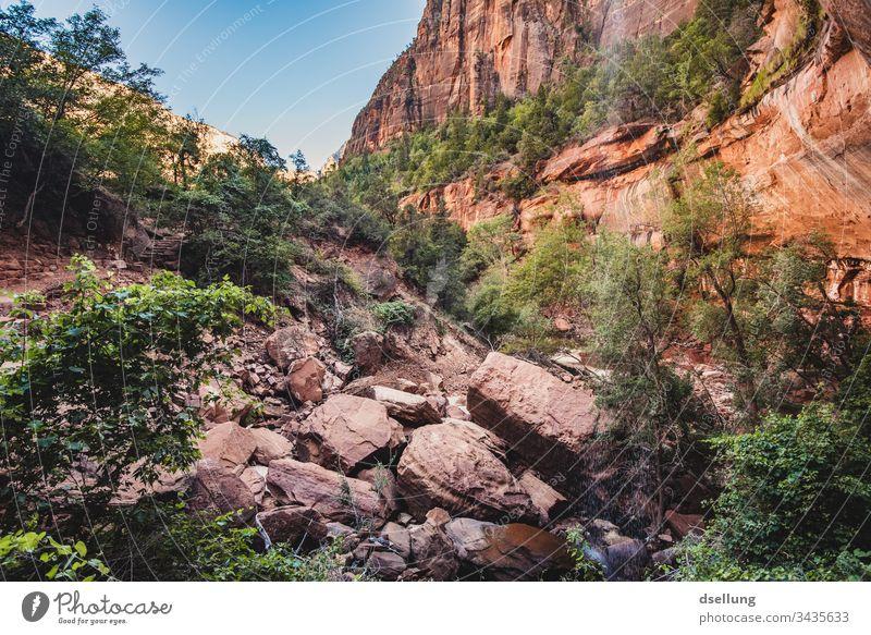 Grün in einer roten felsigen Landschaft Urelemente Tourismus Wüste Kontrast Licht Ferne Schlucht Klimawandel Expedition Wärme Dürre Utah Zion Canyon