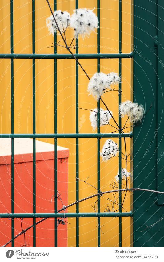 Grünes Gitter, Zweig mit weißen Puscheln vor abstraktem Hintergrund in gelb und orange Zaun grün vertrocknet Muster rechteckig Strukturen & Formen Metall