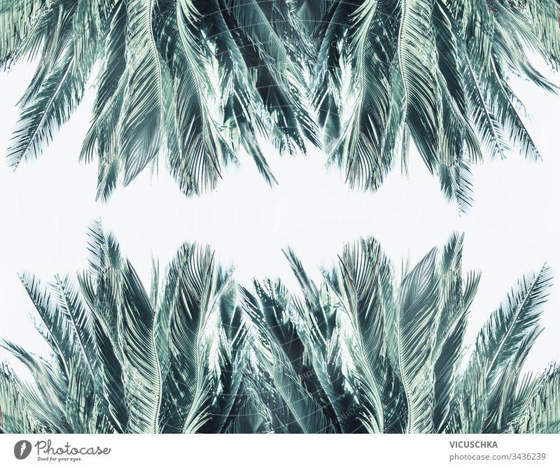 Palmblattrahmen auf weißem Hintergrund Handfläche Blätter Rahmen Textur Muster Laubwerk Regenwald Dschungel tropisch Urlaub Vorlage Flora botanisch Borte Kunst