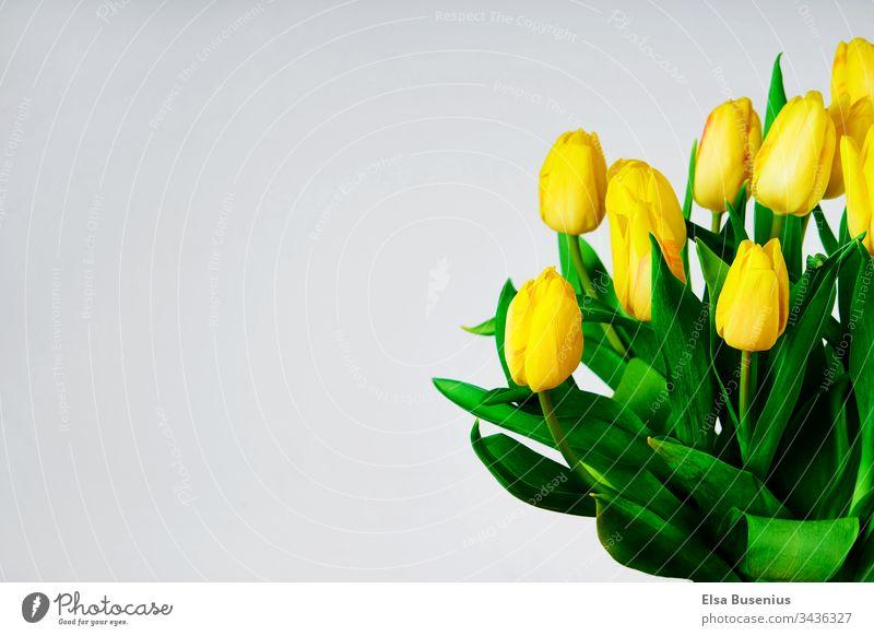 Tulpenstrauß im Frühling Blume Blüte Sommer Pflanze Natur Blühend Farbfoto Nahaufnahme Garten Blatt Duft schön Tulpenblüte tulpenstrauß Ostern. Muttertag