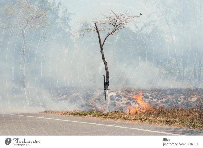 Ein Brand am Straßenrand mit viel Rauch und einem Baum der fast Feuer fängt Flammen Buschfeuer gefährlich brennen heiß bedrohlich Außenaufnahme Wiese Holz