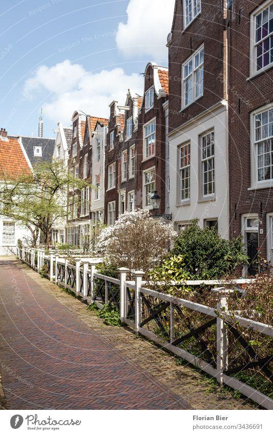 Wohnhäuser mit kleinen blühenden Vorgärten im Frühling in Amsterdam Niederlande Haus Eingang Fenster Fassade Victorianisch Baustil Fensterscheibe Symmetrie