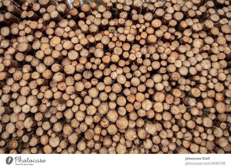 Holzstapel in Nahaufnahme Textur Struktur Muster Raster Rund Kreise Stämme Holzstamm Baum Wald Förster Forstwirtschaft Waldsterben Klimawandel Klimakrise Rodung