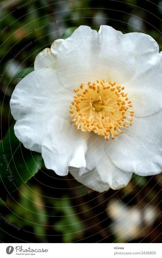 Blume Natur Blüte Pflanze gelb Frühling Wiese weiß Farbfoto Schwache Tiefenschärfe Nahaufnahme Tag Blühend Menschenleer Außenaufnahme mehrfarbig Garten Sommer