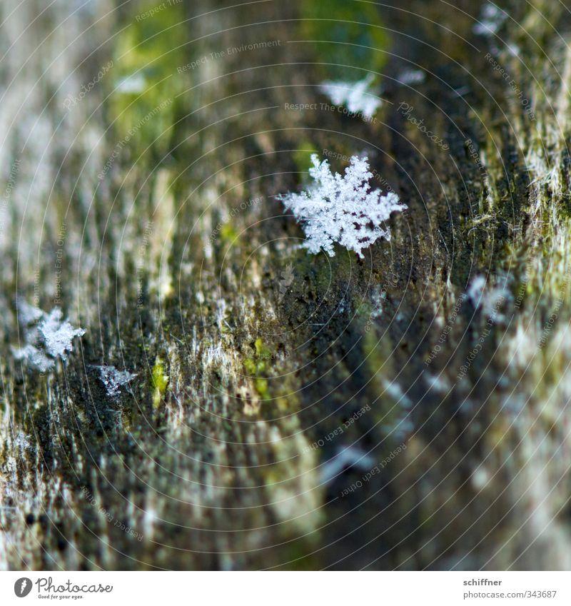 Zeitumstellung | Vorbote Natur Weihnachten & Advent Winter kalt Schnee Holz Anti-Weihnachten Schneefall Eis Stern (Symbol) Moos Eiskristall Eisblumen Schneeflocke Flocke Winterstimmung