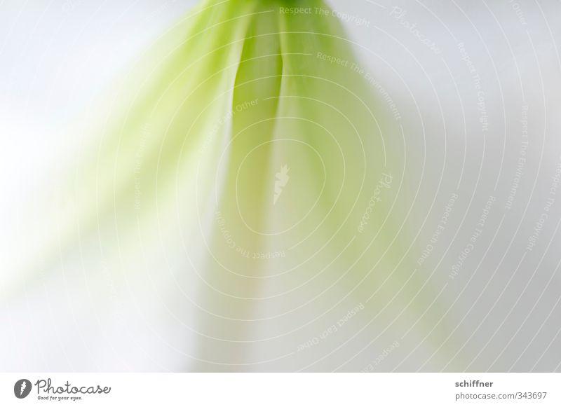 z art Natur grün weiß Pflanze Erholung Blume ruhig Umwelt Gefühle Blüte Hintergrundbild elegant Design Wellness zart exotisch