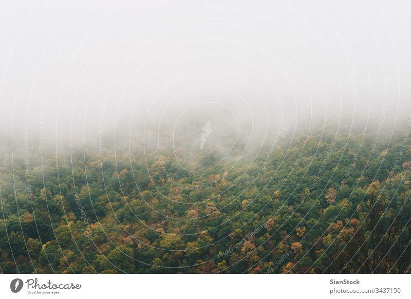 Blick auf neblige Berge mit Bäumen Wald Nebel Natur Griechenland evros Rodopi Herbst Landschaft Baum Licht grün Morgen Hintergrund dunkel Morgendämmerung
