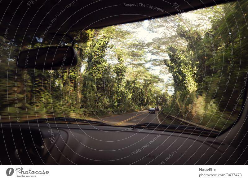 Unterwegs auf Hawaii roadtrip fahren Autofahren Wald Geschwindigkeit schnell USA Kauai