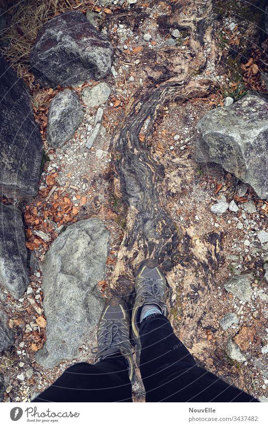 Unterwegs in der Schweiz verzasca Tessin Wurzel Stein wandern laufen Natur draußen Herbst