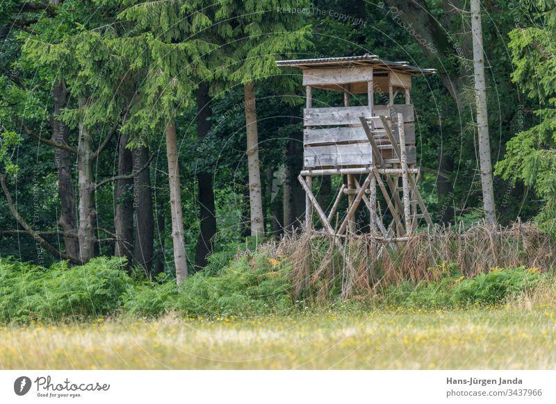 Jägerhochsitz am Waldrand vor einer Wiese mit grünem Hintergrund Hochsitz Jagd Aussichtspunkt Tiere Bäume Europa Tierhaut Natur im Freien Holz hölzern jagen