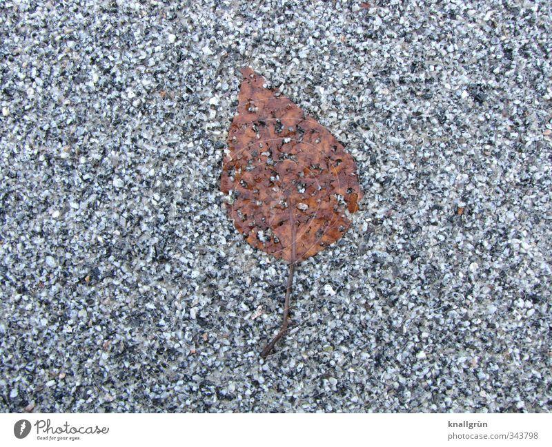 Blatt, platt! Natur Pflanze Straße liegen natürlich braun grau Gefühle Einsamkeit Ende Verfall Vergänglichkeit Asphalt Herbst fossil Farbfoto Gedeckte Farben