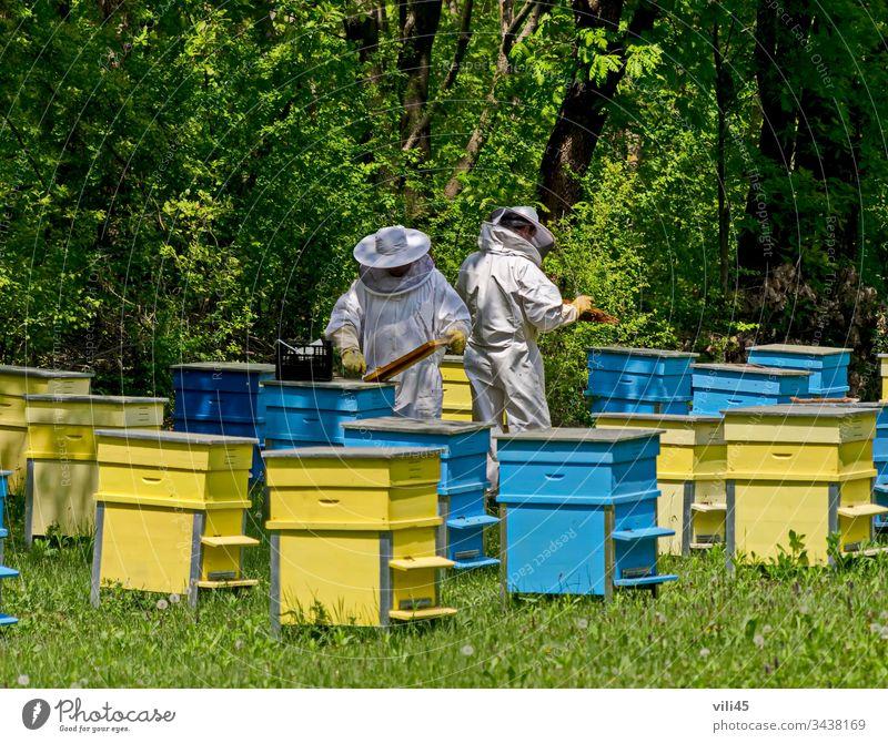 Zwei Bienenmeister im Schleier bei der Bienenarbeit unter den Bienenstöcken zwei Bienen-Meister Imker Imkerschleier Bienenkorb Arbeit Bienenstock Bienengarten