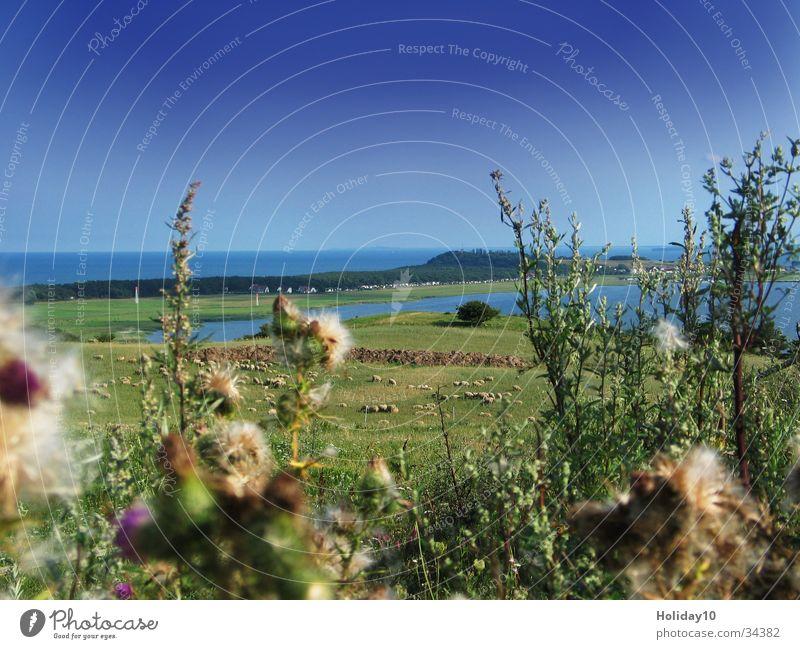 Rügen Wasser Sommer Gras Landschaft Schönes Wetter Halbinsel