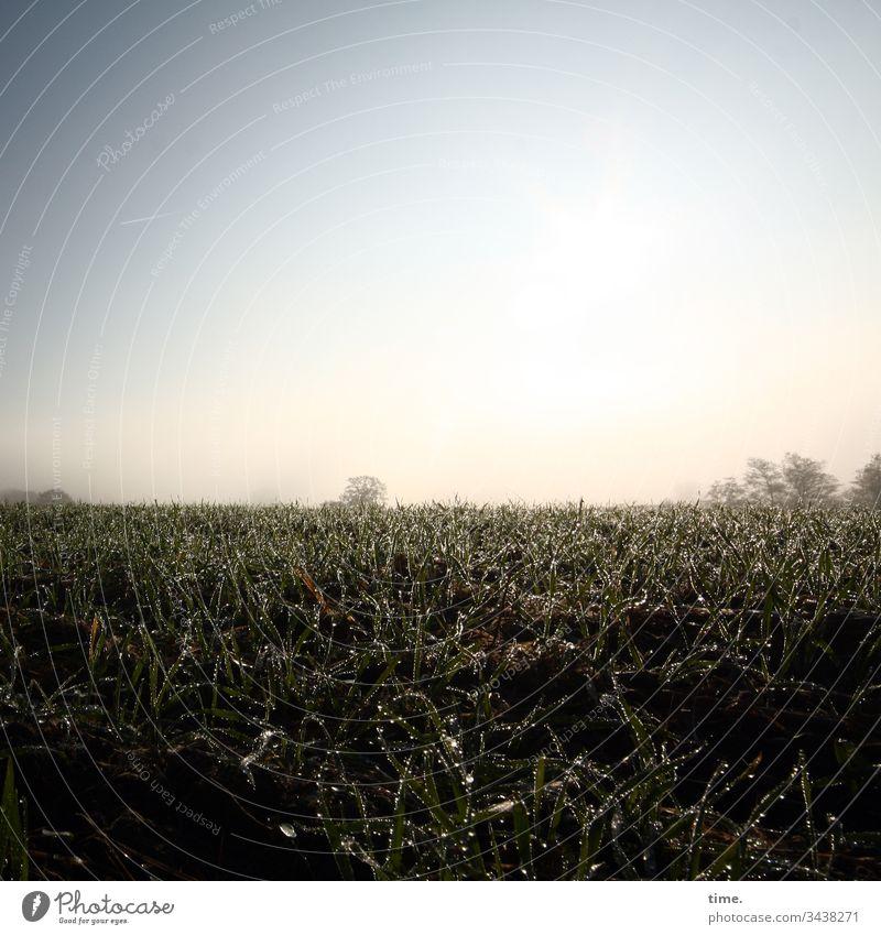 Frühtau (ohne Berge) sonnenlicht horizont himmel glitzern dunkel stimmung gefühl erholung melancholie weite wiese rasen feucht tropfen morgens acker gegenlicht