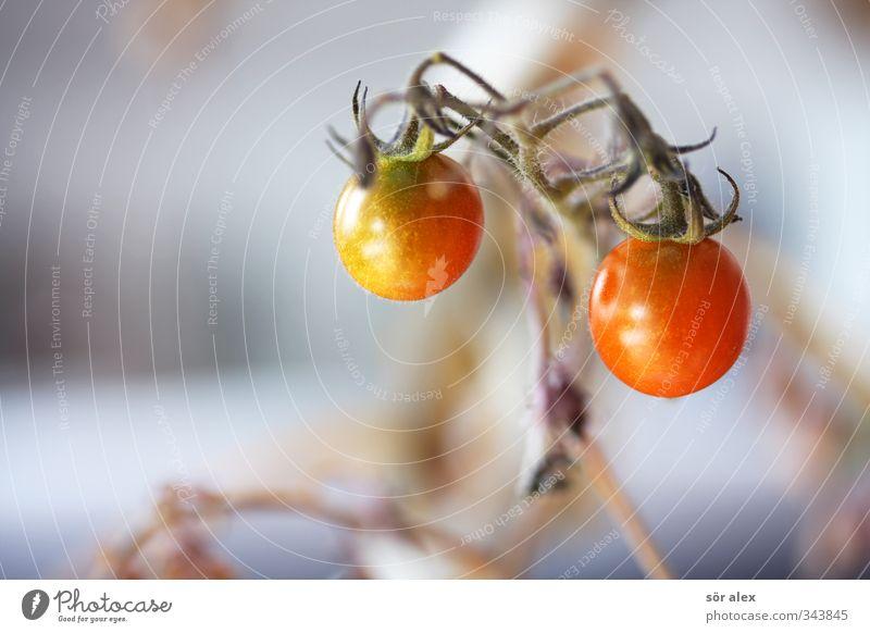Balkonanbau Lebensmittel Gemüse Salat Salatbeilage Tomate Ernährung Essen Frühstück Bioprodukte Vegetarische Ernährung Diät Umwelt Natur lecker saftig rot