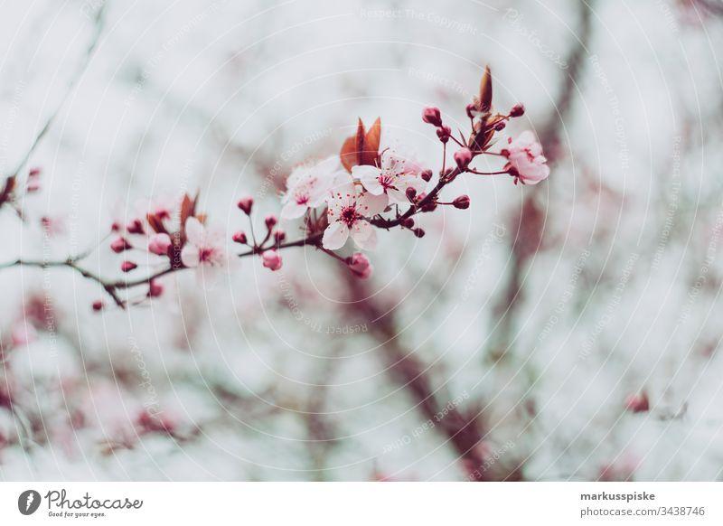 Frühlingserwachen Frühlingsblume Frühlingsfarbe Blume Blüte gelb Ast Blühend blühen