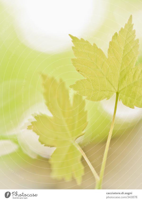 summertime Natur grün schön Pflanze ruhig Blatt Frühling Glück hell träumen Kraft Idylle Schönes Wetter frisch Beginn ästhetisch