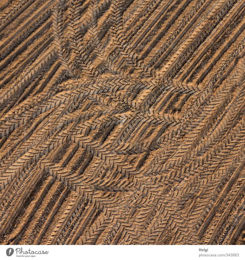 kreativ... Umwelt Natur Landschaft Erde Frühling Schönes Wetter Feld Ornament Linie Spuren ästhetisch authentisch außergewöhnlich einfach einzigartig natürlich