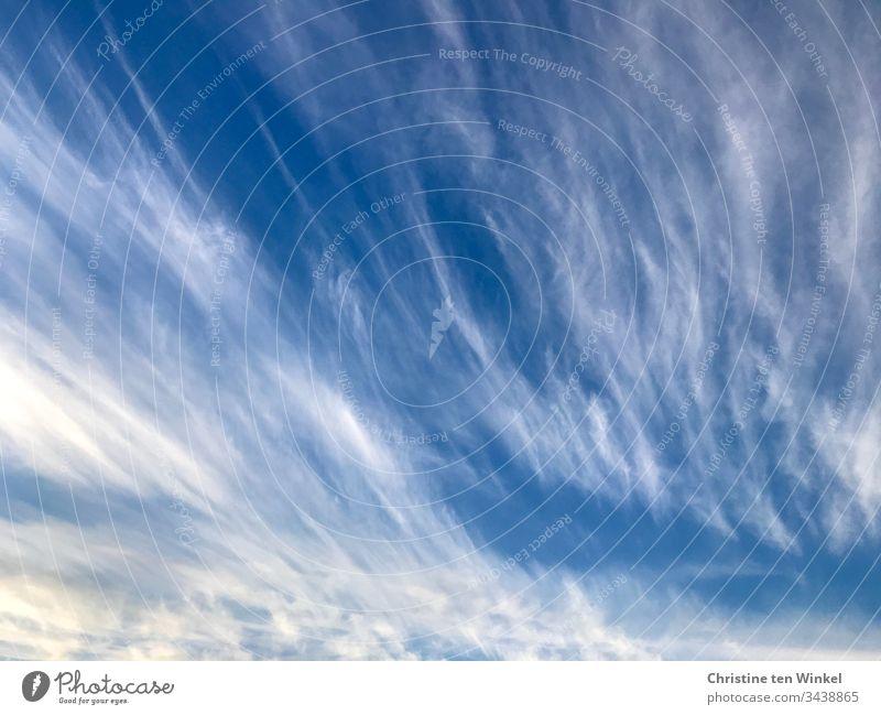 Zirruswolken Federwolken Wolken Himmel blau Stimmung Außenaufnahme weiß Natur Tag Wetter Schönes Wetter Klima Sonnenlicht Sommer Umwelt Klimawandel Hintergrund