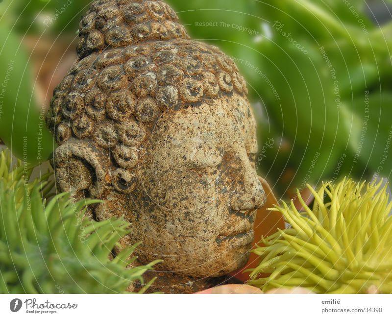 le petit grün Meditation Erholung Unschärfe Handwerk Buddha Stein alt Kopf Pflanze Stachel