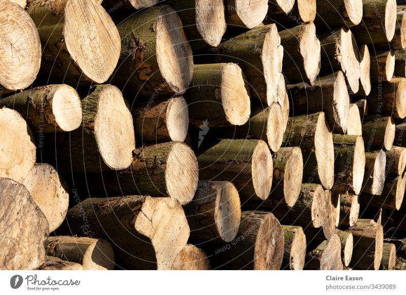Vollbild-Schrägansicht eines Stapels gesägter Baumstämme. Warme helle und dunkle Brauntöne. Protokollspeicher Holz Totholz Natur Außenaufnahme Nahaufnahme