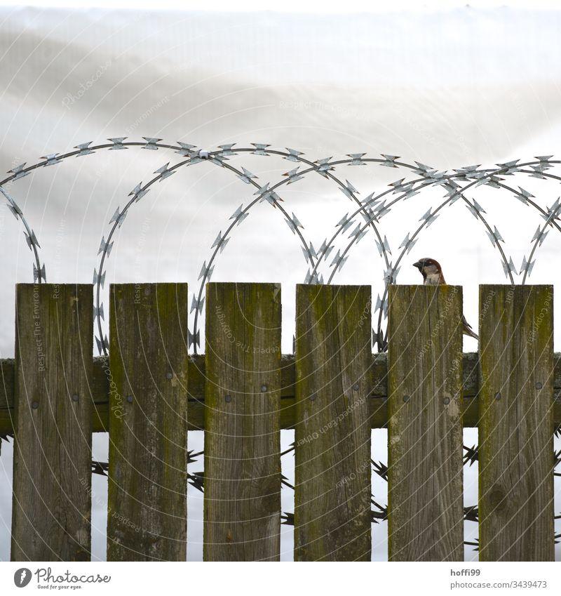 Ansichtssache - Vogel auf Holzzaun mit Stacheldraht Zaun Stacheldrahtzaun Borte Barriere Menschenleer Maschendrahtzaun Schutz Justizvollzugsanstalt gefährlich
