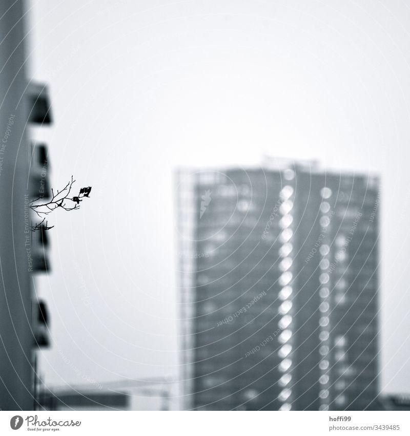 Fokus auf kleinem Buchenzweig in einer städtischen Umgebung Buchsbaum Pflanze Wolkenkratzer städtische Gartenarbeit einsam Einsamkeit urban Großstadt modern