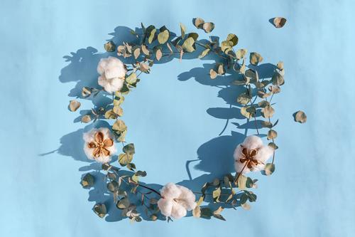 Runder Rahmen aus frischen Eukalyptusblättern und Baumwollblüten auf hellrosa Hintergrund. Kreative Blütenkomposition. Flachlegung, Draufsicht, Kopierraum Blume