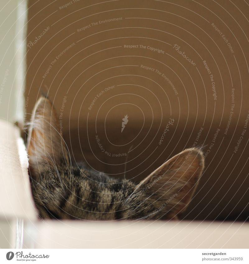 happy cat-day!! Kasten Erholung eckig lustig braun Sicherheit Geborgenheit Angst Trägheit bequem Karton Katze Katzenkopf Katzenohr verstecken Versteck