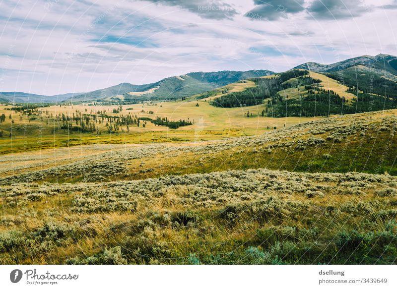 grüne karge Landschaft mit leichten Hügeln, Bäumen und bedecktem Himmel Erde Urelemente Naturliebe Panorama (Aussicht) Freiraum atmen Leben Zufriedenheit Klima