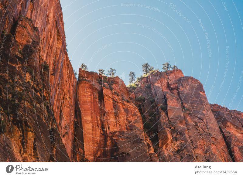 Rote hohe Felsen mit Bäumen die in den Himmel ragen Ferien & Urlaub & Reisen Zion National Park USA Sommer rot steil blau hoch felsig stabil massiv