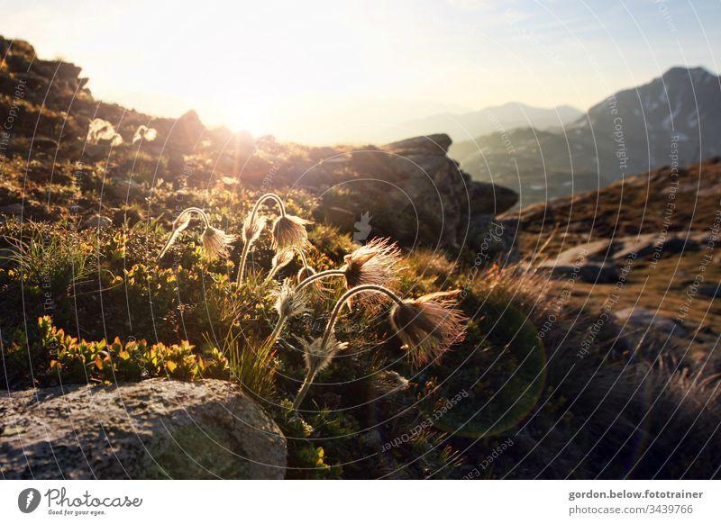 Bergweltromantik Tageslicht Farbe Querformat wenig Farbe Himmel Berge Panoramaaufnahme Natur Außenaufnahme Berge u. Gebirge blau natürlich Menschenleer