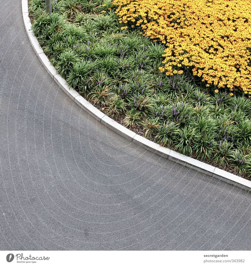 runde ecke. Umwelt Natur Pflanze Tier Sommer Blume Sträucher Grünpflanze Verkehr Verkehrswege Straße Wege & Pfade Wegkreuzung eckig unten Stadt gelb grau grün