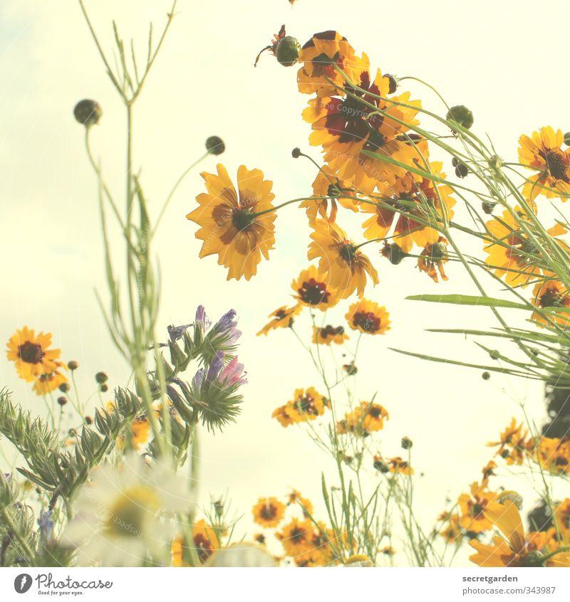 sag es durch die blume. Himmel Natur grün Sommer Pflanze Farbe Erholung gelb Umwelt Wiese Frühling Blüte natürlich Garten Stimmung Idylle
