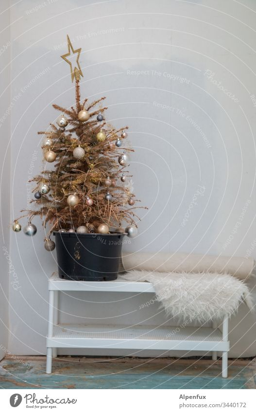 Ostereierbaum Nadelbaum Weihnachtsbaum Weihnachten & Advent Tanne Farbfoto Menschenleer weihnachtskugeln Tannennadel Tannenzweig Christbaumkugel