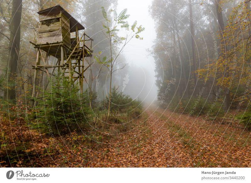 Hölzerner Jägerhochsitz am Waldrand bei Nebel im herbstlichen Kiefernwald Hochsitz perchet Jagd Aussichtspunkt Tiere grün Wiese Bäume Europa Tierhaut Natur