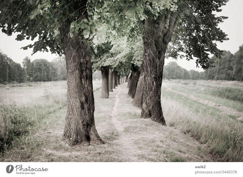 Zielführend eng Weg Bäume schmal Wege & Pfade Landschaft Natur Außenaufnahme draußen Wald ruhig Umwelt Menschenleer Farbfoto Gedeckte Farben Feldrand Allee