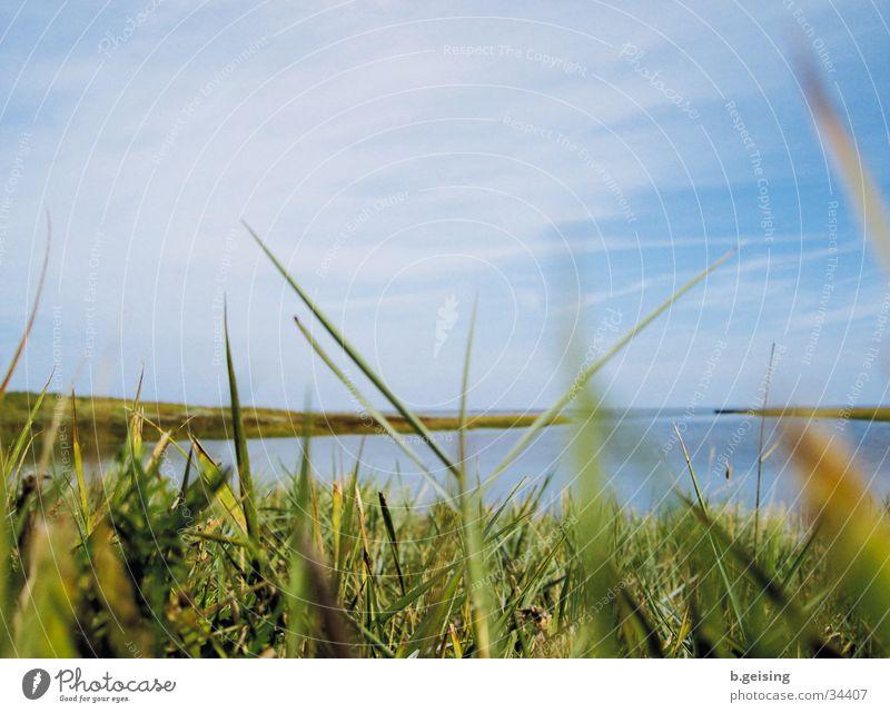 Neuwerk03 Meer Ferne Gras Küste Nordsee