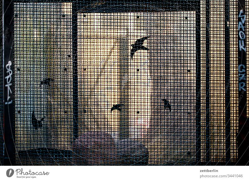 Voliere außen menschenleer textfreiraum voliere vogelvoliere käfig vogelkäfig zoo tierpark gefängnis gefangen eingesperrt vogelkunde gitter vergittert licht