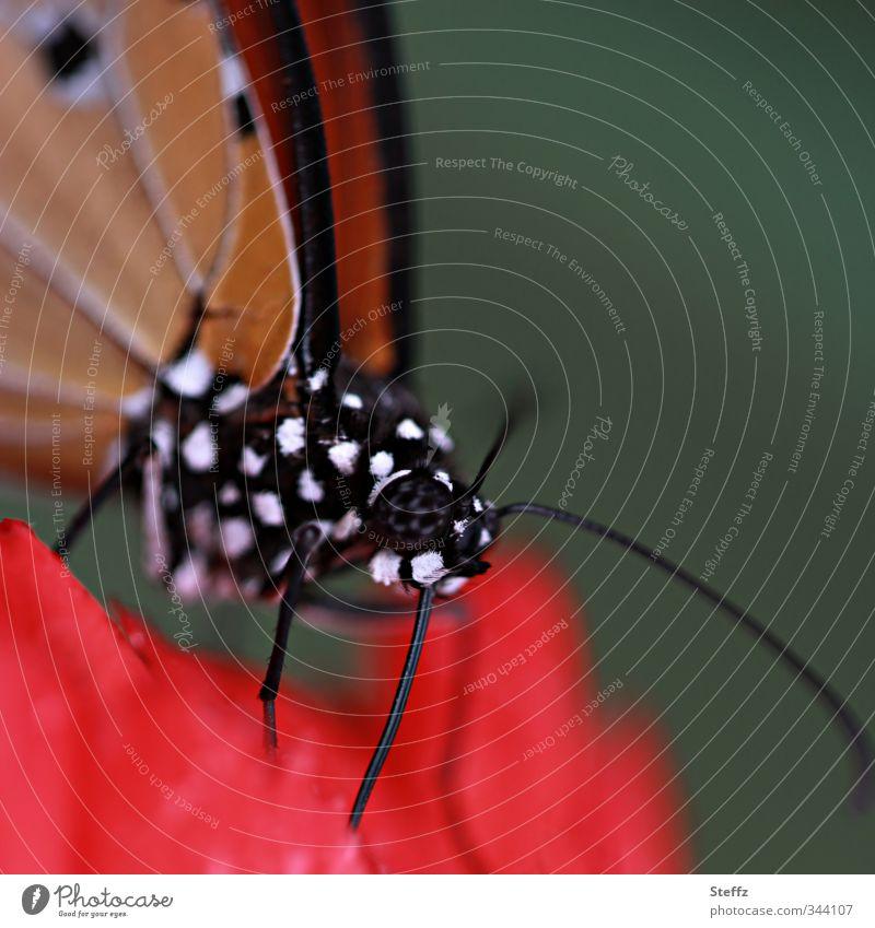 grafisch | mit pepita design Natur Pflanze Farbe Sommer rot schwarz Design ästhetisch Punkt Lebewesen Insekt Tiergesicht Schmetterling Inspiration Symmetrie gepunktet