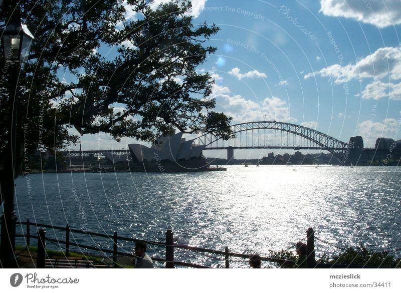 Habour Bridge Wasser Baum Wolken Kunst Brücke Skyline Australien Oper Sightseeing Sehenswürdigkeit Sydney Stadt