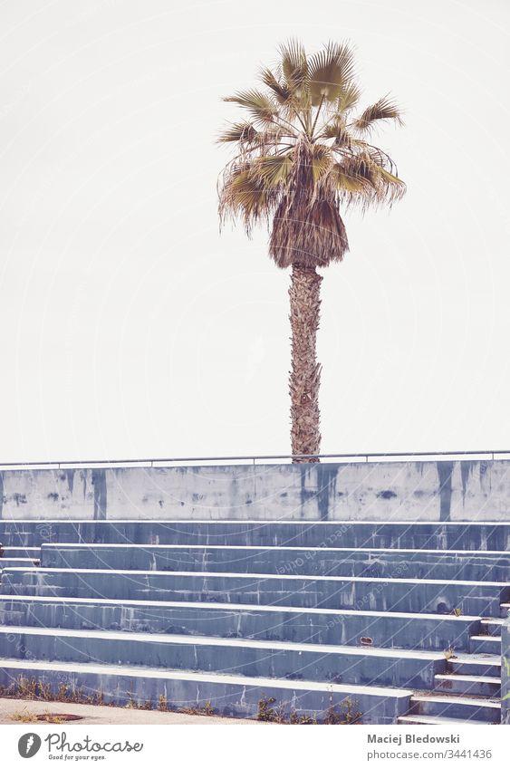 Palme über leeren Betonplätzen im Stadion. Sitz Reihe Sport Arena retro Handfläche Baum Verlassen niemand Himmel altehrwürdig Schritt Außenseite Treppe Spiel