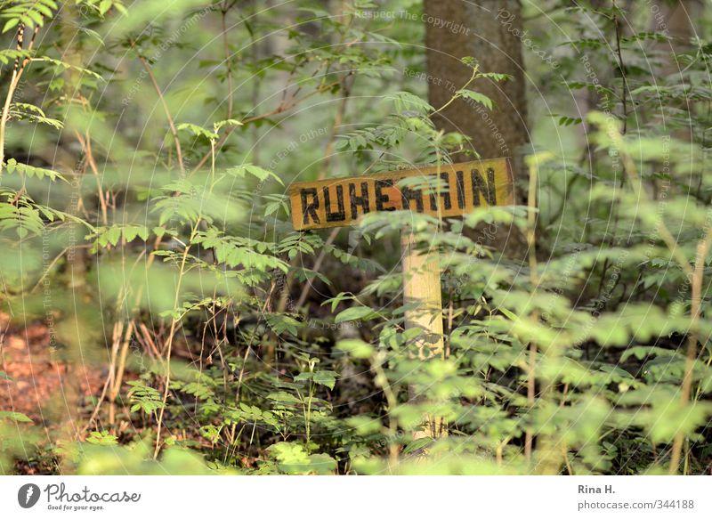 Ruhehain Umwelt Natur Landschaft Pflanze Frühling Schönes Wetter Baum Wald natürlich grün Erholung Vergänglichkeit ruhig Vorschrift Schilder & Markierungen