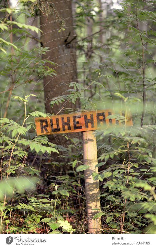 Ruhehain II Natur grün Pflanze Baum Landschaft ruhig Wald Frühling natürlich Idylle Schönes Wetter Hinweisschild Vergänglichkeit Friedhof Warnschild