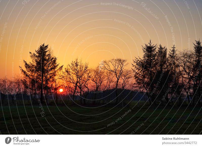 Sonnenuntergang Abend Abenddämmerung Abendsonne Abendstimmung Abendröte Himmel Dämmerung Außenaufnahme Silhouette Natur Menschenleer Baum ruhig Farbfoto